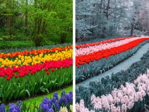 Er du fargeblind? Prøv denne testen!